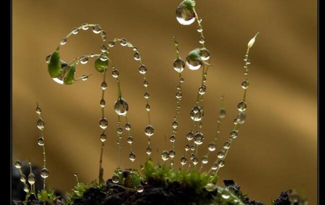 Gocce d 39 acqua effetti sorprendenti con le gocce d 39 acqua for Finestra con gocce d acqua