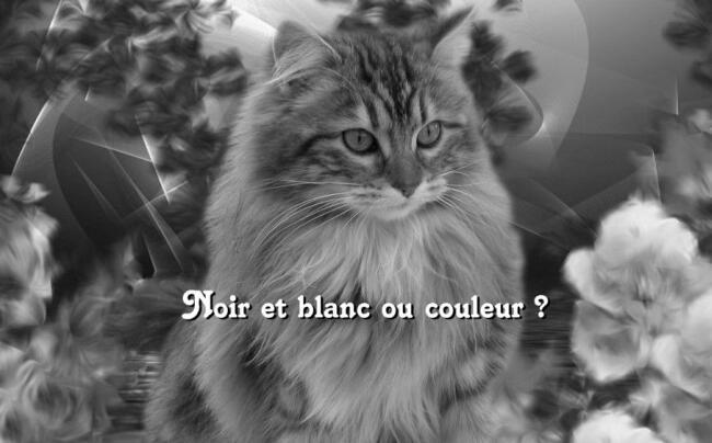 Bianco e nero o colore le foto pi belle pps amore - Pagine a colori in bianco e nero ...